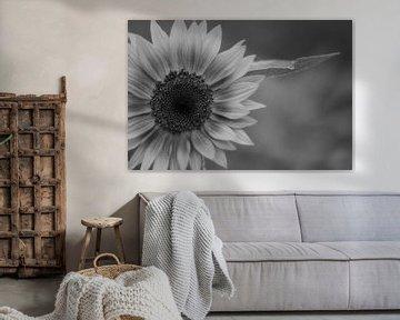Schwarz-weiße Sonnenblume von J..M de Jong-Jansen