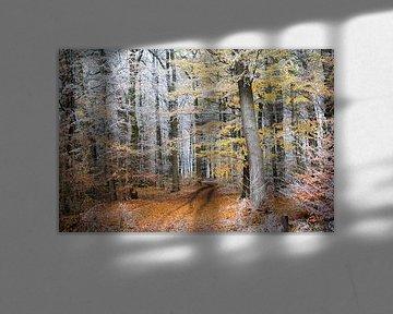 Début de l'hiver sur un chemin forestier automnal avec un feuillage coloré et un givre blanc sur les