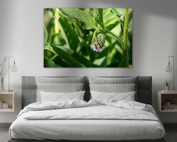 consoude (Symphytum officinale), fleurs et feuilles de la plante utilisée en médecine biologique, gr