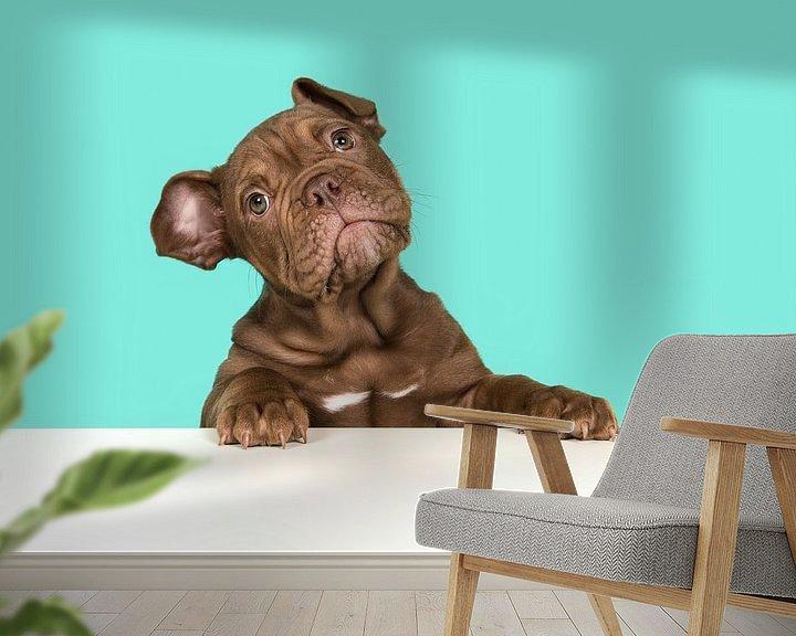 Beispiel fototapete: Englischer Bulldoggen-Welpe von Elles Rijsdijk