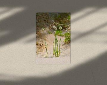Gras in den Dünen von Denis Feiner