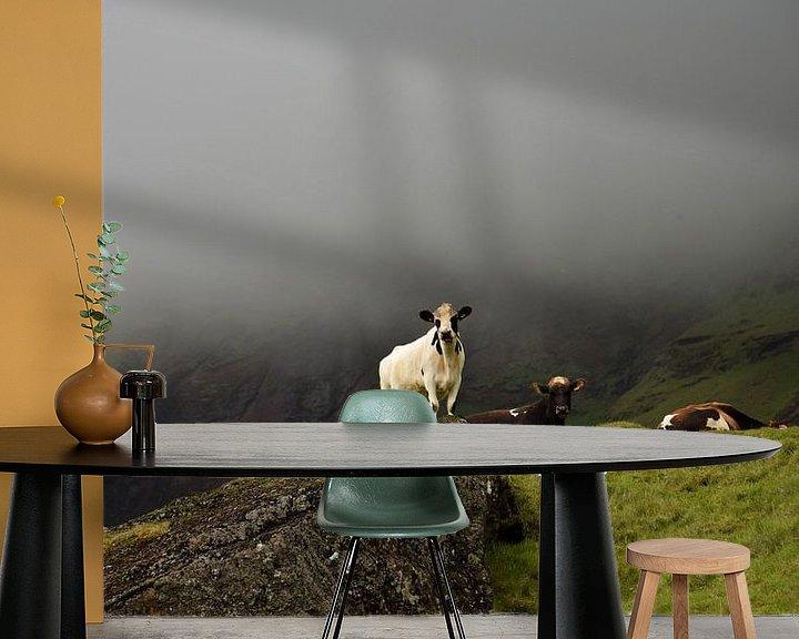 Beispiel fototapete: Isländische Kuh schaut über ihre Felder von Elisa in Iceland