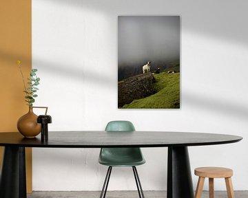 Isländische Kuh schaut über ihre Felder von Elisa in Iceland