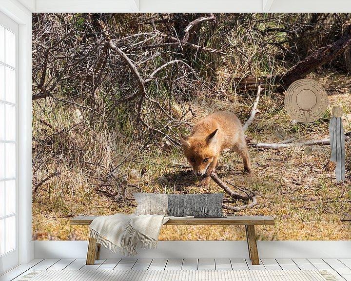 Beispiel fototapete: Junger Fuchs entdeckt die Welt von Merijn Loch