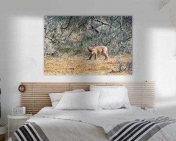 Jonge vos bekijkt zijn leefgebied