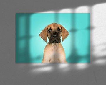 Duitse dog pup portret van Elles Rijsdijk