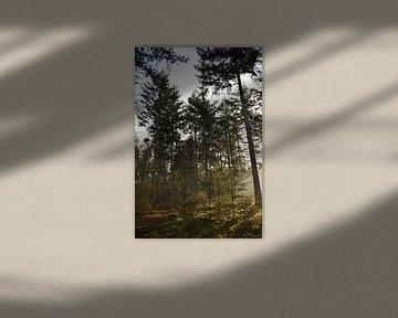 Zonnige ochtend in het bos van Sylvia van der Hoek
