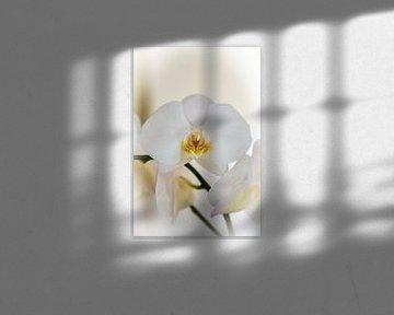 orchidee van Willem Holle WHOriginal Fotografie