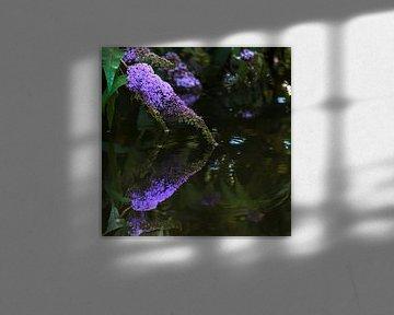 Vlinderstruik boven het water van Anouschka Hendriks