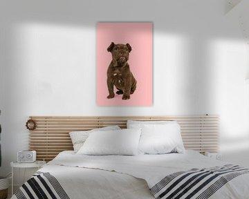 Schattige bulldog pup van Elles Rijsdijk