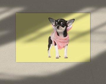 Chihuahua-Welpe von Elles Rijsdijk