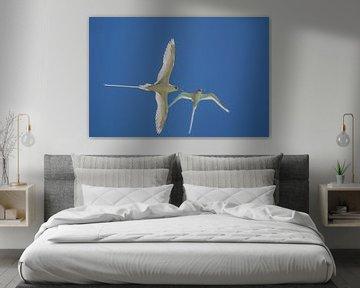 Witstaartvogel (Phaethon lepturus) van Dirk Rüter