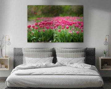 Die Tulpe von Willem Holle WHOriginal Fotografie