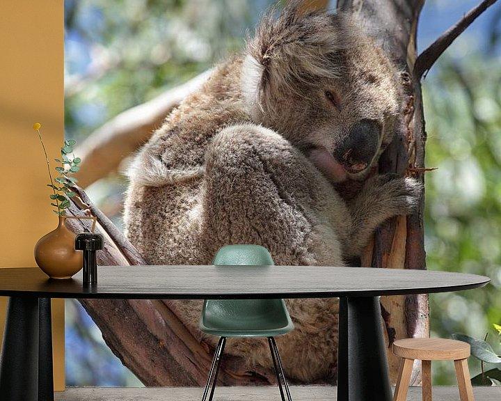 Beispiel fototapete: Koala (Phascolarctos cinereus) von Dirk Rüter