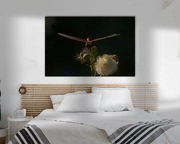 Blutrote Heidelibel auf einer toten Blume von Kristof Lauwers