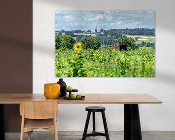 Zonnebloemen in Simpelveld van John Kreukniet