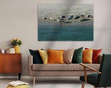 Zeehonden op de Waddenzee.