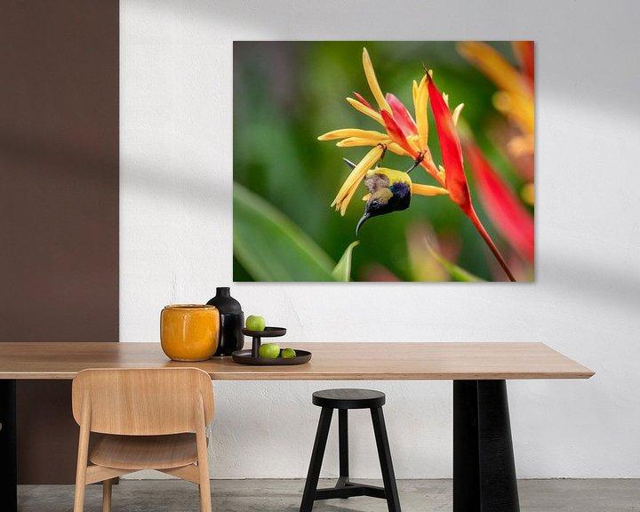 Sfeerimpressie: De Aziatische Kolibri heet een Honingzuiger van Marlies Gerritsen