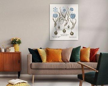 Basilius Besler-gebrochener gelber Wald -- Art Tulpe etc.