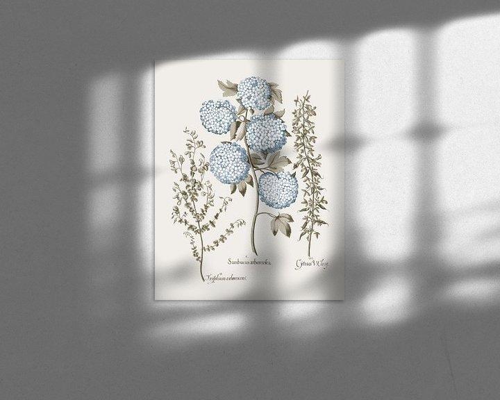 Beispiel: Basilius Besler-Tuinbroom Schneeball Viburnum Niedrig wachsendes alpines Brom