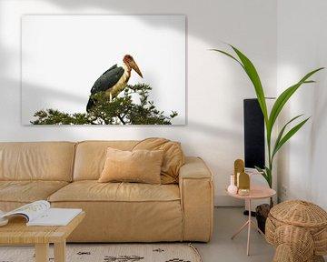 Afrikanischer Marabu von Marije Zwart
