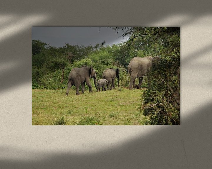 Beispiel: Elefantenfamilie von Marije Zwart