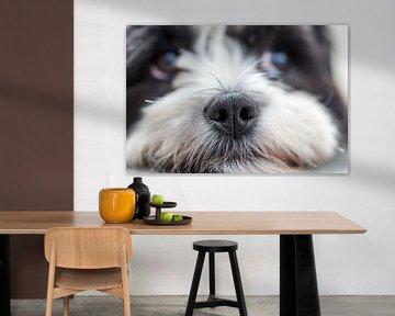 Nase des Bumernhundes von Aspectus | Design en Realisatie