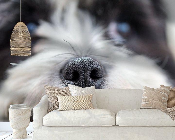 Beispiel fototapete: Nase des Bumernhundes von Aspectus | Design en Realisatie