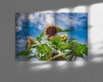 Sonnenblumenstrauss in Blau mit Wolken von J..M de Jong-Jansen