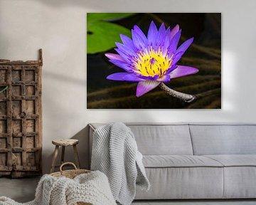 Lotus bleu en fleurs sur Marlies Gerritsen