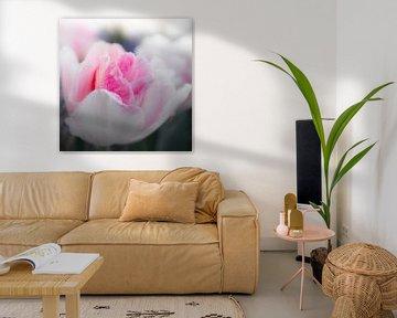 Rosen-Tulpe von Freddy Hoevers