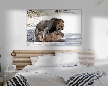 Paarung von Löwen von Felix Sedney