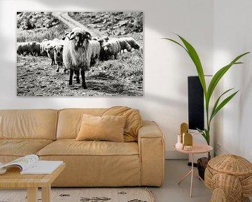 Schafe von Lisette Sloet