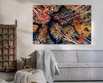 Kleurrijk kruinen van Corinne Welp