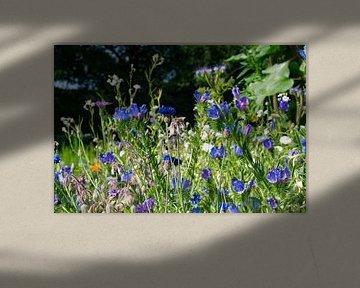 Blauviolettes Blumenfeld von J..M de Jong-Jansen