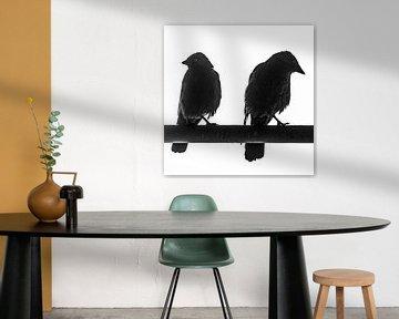 Schwarz-Weiß-Foto von zwei kauenden Vögeln von Jeffrey Steenbergen