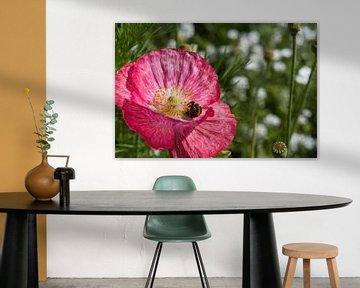 Hummel voller Pollen in einem rosa Mohn von J..M de Jong-Jansen