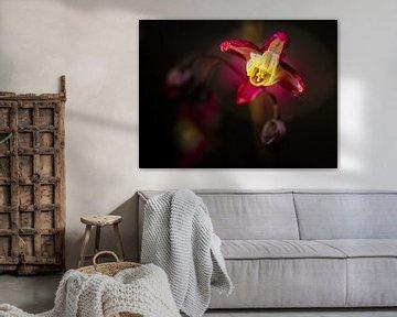 Elfenblume von Rob Boon