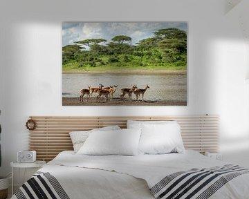 Een groep impala's staat aan de over van een meer van OCEANVOLTA