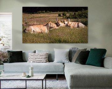 Koeien van Rob Boon