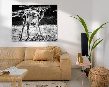 Bambi en noir et blanc