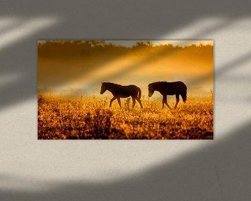 Paardjes in de mist bij vroege morgen