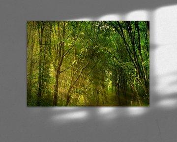 Tagträumen von Koen Boelrijk Photography