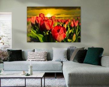 Tulpenveld met zonsondergang van Wim van Beelen