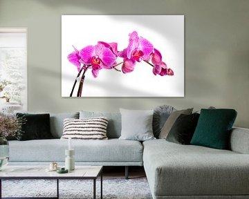 Orchidee van Angelika Stern