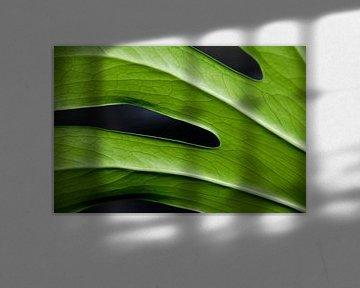 groene vingers von jan van de ven