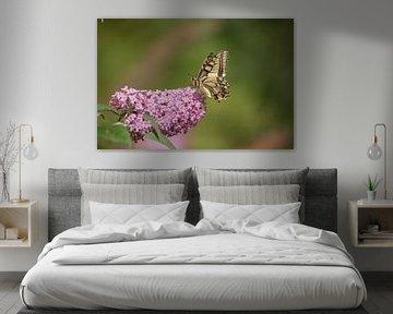 Pagen der Königin (Papilio machaon) von Eric Wander