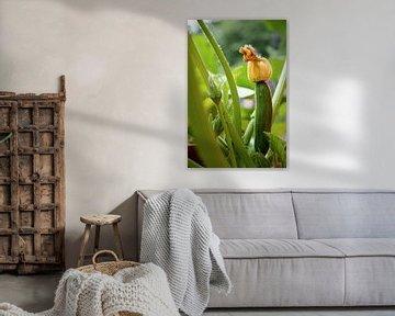 courgette fruit avec fleur sur une plante dans le potager, foyer sélectionné, profondeur de champ ét