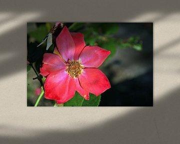 Flowerpower von Kirsten L.