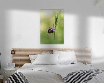 Orchidee von Iris Waanders